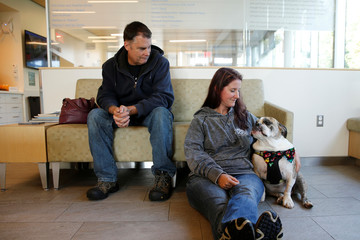 Moose, a six-year-old English Bulldog, waits with his owners to receive trial medical treatment in North Grafton