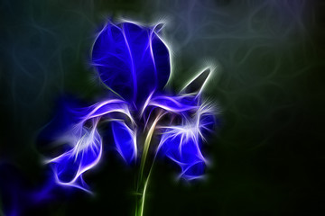 Fractal image of a delicate blue iris flower on a black background