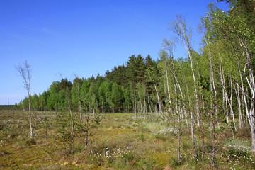 Landscape in Berezinsky Biosphere Reserve