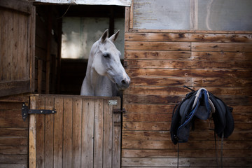 Spoed Foto op Canvas Paarden portrait of a white horse