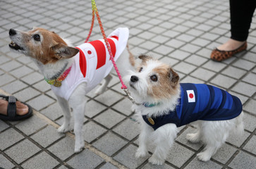 Dogs dressed in Japanese rugby shirts