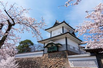 金沢 満開の桜と金沢城石川門