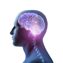 3D Rendering of Star-filled Brain on White