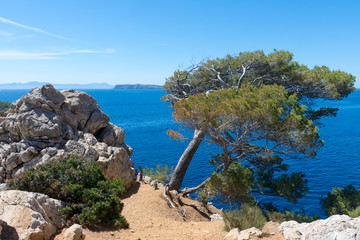 tree on the shore of the Bay of Pollensa in Mallorca