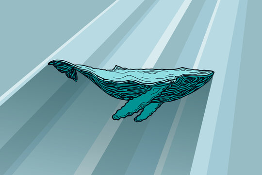 Vector silhouette of whale under water. Side view, sun rays fall on a large humpback whale in the water. The shadow falls from the whale. The whale is painted with a pencil.