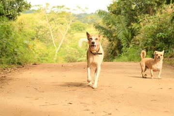 Corrida Canina 3