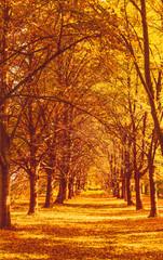 Aluminium Prints Autumn Beautiful autumn landscape background, vintage nature scene in fall season
