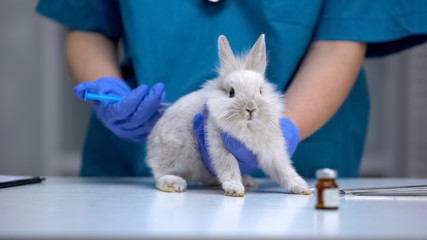 Nurse giving injection to helpless rabbit, vaccine research, animal test closeup