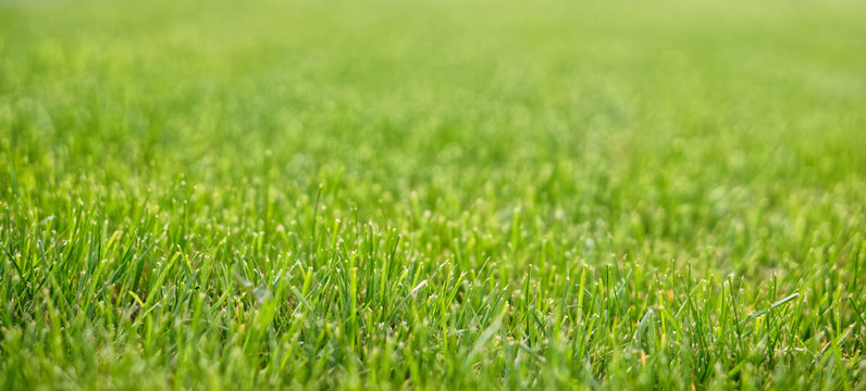 A neatly trimmed lawn in a city park. Close-up. Shallow depth of field
