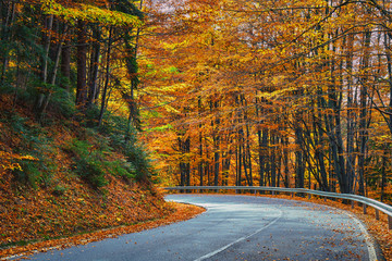 Asphalt road through vibrant forest