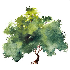 Green tree with leaves. Hand drawn watercolor painting,isolate on white background.Colorful splashing in the paper.It is wet texture with paint brushes stoke.Stylized summer tree. Eco design.