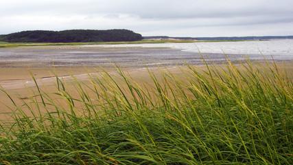 Cape Cod, USA: Schwemmwiese am Strand bei Ebbe, Bucht von Wellfleet