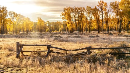 An autumn landscape scene in Jackson Hole, Wyoming, including an old style buck and rail wooden ranch fence and backlit cottonwood trees.