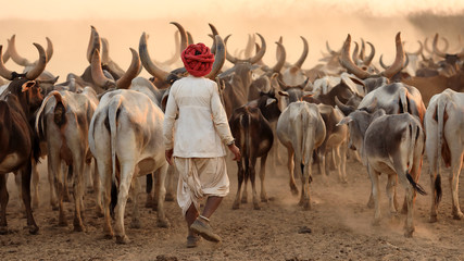 Rabari herder in a rural village in the district of Kutch, Gujarat. The Kutch region is well known for its tribal life and traditional culture. Fototapete