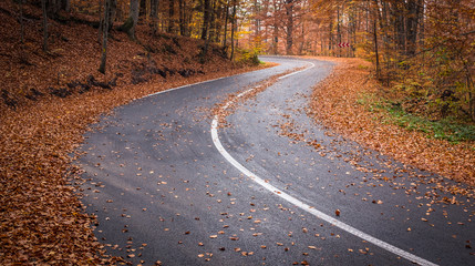Curvy asphalt road in the autumn forest