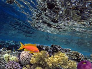 Underwater world landscape with corrals