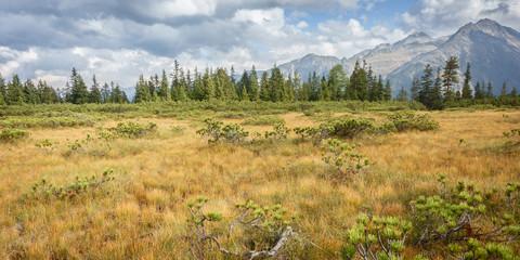 Fototapete - Herbstlandschaft in einem Sumpfgebiet in Gerlos Österreich als Panorama