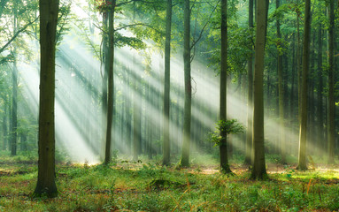 Obraz Beautiful morning in the forest - fototapety do salonu