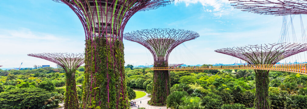 Supertree grove in garden by the bay, Singapore.