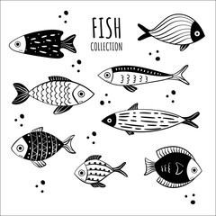 Collection of fish hand drawn with contour lines on white background. Bundle underwater animals or creatures living in sea and ocean. Monochrome vector illustration in vintage etching style.