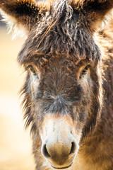 Portrait - Kopf von einem Esel