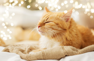 Fototapete - pets and hygge concept - red tabby cat sleeping on blanket at home in winter