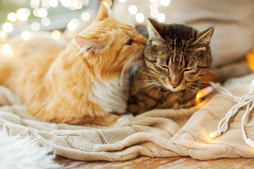 Fototapete - pets, christmas and hygge concept - two cats lying on window sill with blanket at home