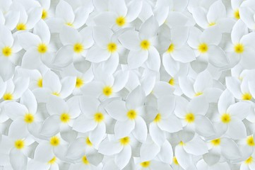 Papiers peints Frangipanni white plumeria flower pattern background