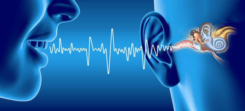 People talking, soundwave and ear anatomy, medical 3D illustration