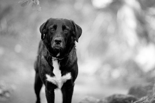 Portrait chien noir nature ruisseau