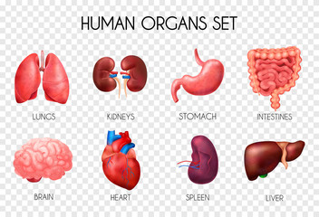 Realistic Human Internal Organs Transparent Icon Set