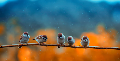 funny many little birds sparrows sitting on a branch in a bright autumn Park under the cold rain