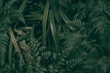Tropical green leaf background, Dark tone theme.