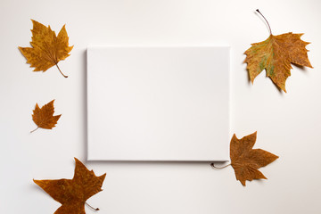 Empty poster, dried leaves on white background. Autumn, fall, concept. Golden autumn. Flat lay.