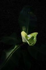 Plants at Dawn