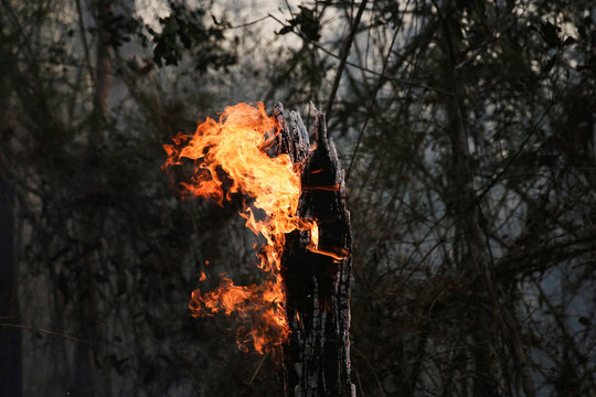 A tree trunk burns in a forest near Santa Monica community in Concepcion