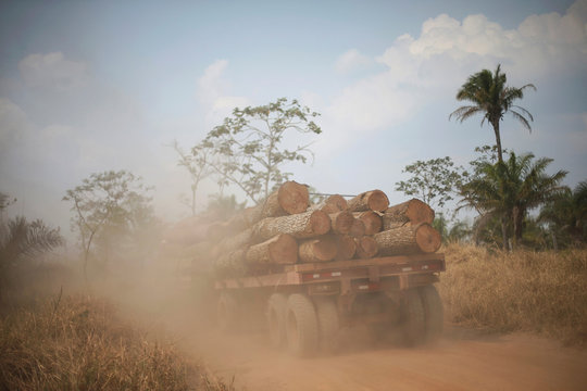 A truck loaded with tree trunks is pictured near the Santa Monica community in Concepcion