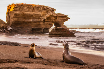 Galapagos Sea Lions on Galapagos Islands. Sea lion pup and adult at sunset on beach in Puerto Egas (Egas port) Santiago island, Ecuador. Galapagos Islands cruise ship travel destination.