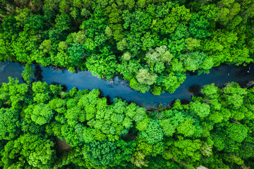Photo sur Plexiglas Rivière de la forêt Green forest and river in Tuchola national park, aerial view
