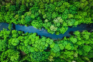 Photo sur Aluminium Rivière de la forêt Green forest and river in Tuchola national park, aerial view
