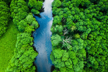 Photo sur Aluminium Pistache Aerial view of forest and river in Tuchola national park