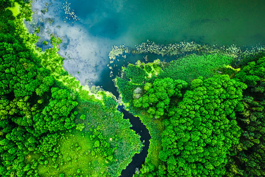 Strange blooming algae on the lake in summer, flying above