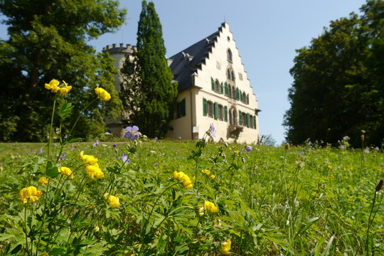 Blühende Sommerwiese am Schloss Rosenau in Oberfranken