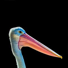 Pelican Detail - Square 04