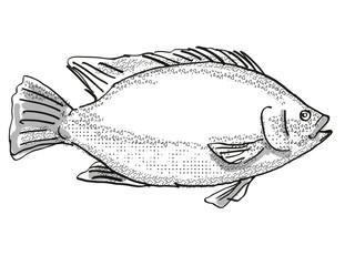 Tilapia Fish Cartoon Retro Drawing