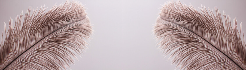Ostrich feathers texture background. Close-up details. Long horizontal banner. Header format.