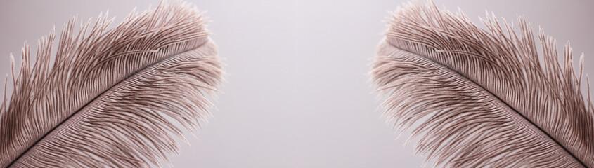 Foto op Plexiglas Struisvogel Ostrich feathers texture background. Close-up details. Long horizontal banner. Header format.