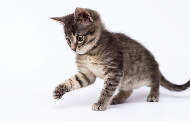 Wall Mural - cute striped kitten looks up on a white background