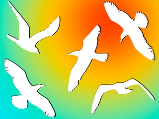 white silhouettes of flying birds against the sky and the bright sun.