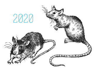 Rat sketch vector illustrations. Hand drawn picture with mouse.
